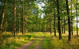 Летом так приятно отправиться на прогулку в лес!