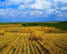 Российско-Китайский Фонд агропромышленного развития официально зарегистрирован